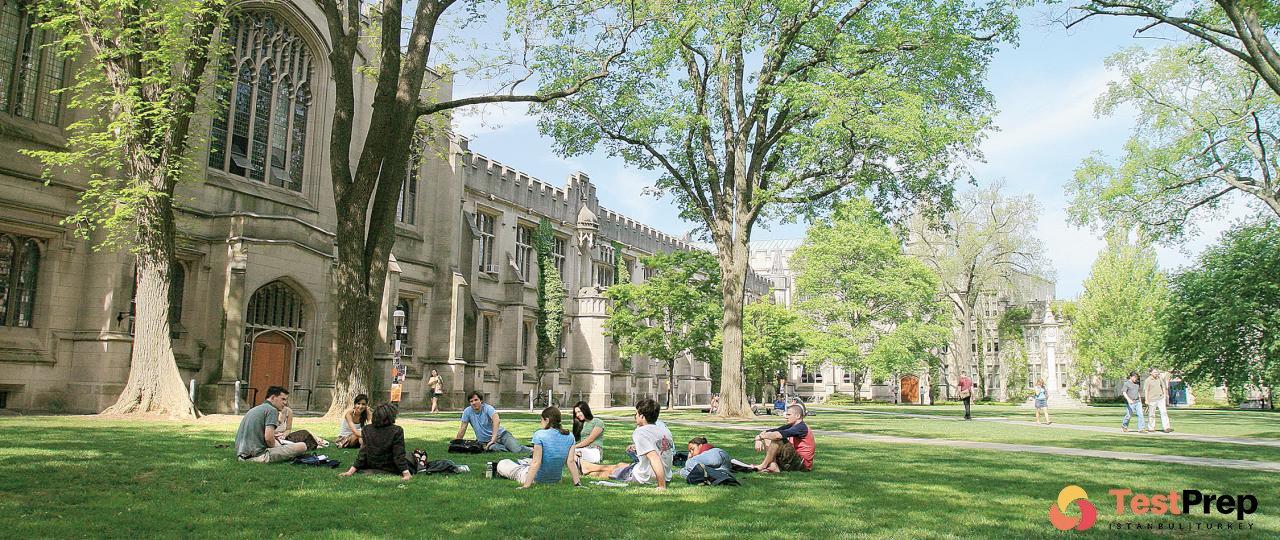 Uluslararası üniversite
